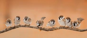 Porción de pequeños pájaros divertidos que se sientan en una rama