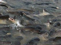 Porción de pescados Fotos de archivo libres de regalías