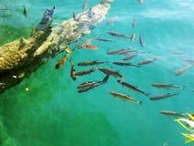 Porción de pescados en el lago Foto de archivo