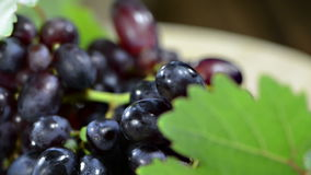 Porción de uvas azules (no loopable) Imágenes de archivo libres de regalías