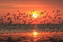 Porción de volar de los pájaros Imágenes de archivo libres de regalías