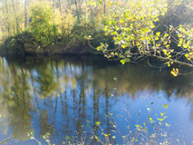 Porción del río Foto de archivo