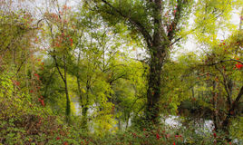 Porción del río Imagenes de archivo