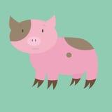 porcin illustration stock