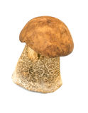 Porcine mushroom isolated. On white background Stock Photo