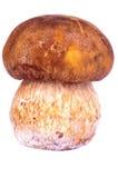 Porcini蘑菇 图库摄影