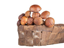 Porcini采蘑菇在白色bac隔绝的一个柳条筐 免版税库存图片