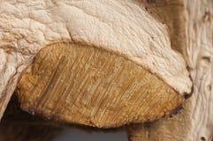 porcini сухого гриба Стоковая Фотография RF