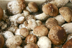 Porcini Stock Photo