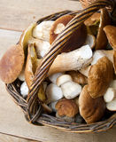 Porcini Royalty Free Stock Photo