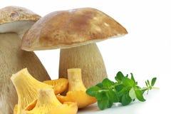 Porcini And Chanterelle Mushroom Stock Image