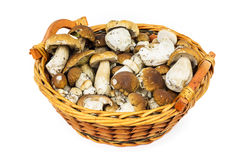 Porcini in basket Royalty Free Stock Photos
