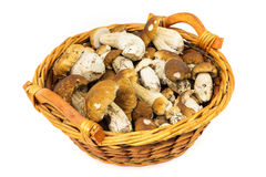 Porcini in basket Royalty Free Stock Photography