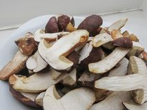 Porcini boletus edulis mushroom food Stock Images
