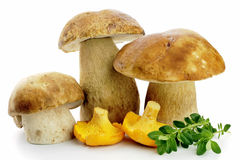 Porcini and Chanterell mushrooms Stock Image