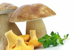 Porcini and Chanterelle Mushroom Stock Image