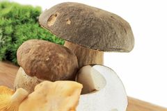 Porcini and Chanterelle Mushroom Royalty Free Stock Images