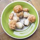 porcini de champignon de couche Photos stock