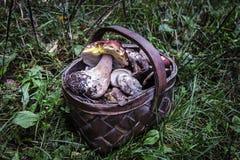 Porcini de dois cogumelos na grama Fotografia de Stock