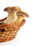 Porcini mushroom Royalty Free Stock Photos