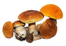 Porcini mushroom (Boletus edulis). Aka bolete or penny bun isolated on white Stock Image