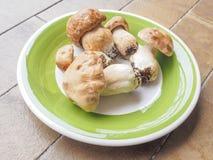 Porcini Mushroom Stock Photography