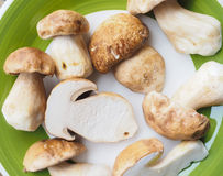 Porcini Mushroom Royalty Free Stock Images