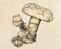 A porcini mushroom. Food,vintage Royalty Free Stock Photography
