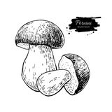Porcini mushroom hand drawn vector illustration. Sketch food dra Royalty Free Stock Images