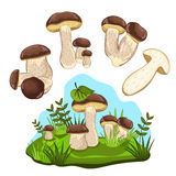 Porcini mushroom isolated, vector illustration Royalty Free Stock Photo