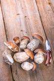 Porcini Mushroom Stock Images