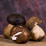 Porcini mushrooms. Closeup of dried porcini mushrooms with studio background Stock Photos