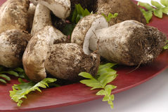 Porcini mushrooms. Royalty Free Stock Images