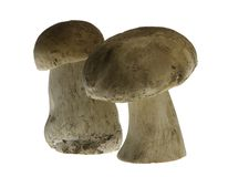 Porcini Mushrooms Stock Photography