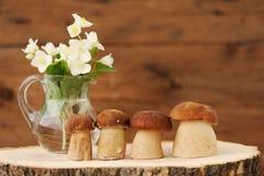 Porcini mushrooms (Boletus edulis) stand on wooden background wi Royalty Free Stock Photography