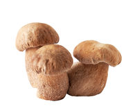 Porcini mushrooms. Cep on white Royalty Free Stock Photos