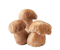 Porcini mushrooms. Cep on white Stock Photography