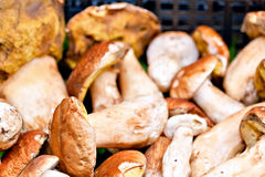 Porcini mushrooms Stock Photos