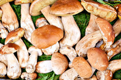Porcini mushrooms Stock Images