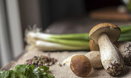 Porcini mushrooms and Cook ingredients on Windows light Royalty Free Stock Photos