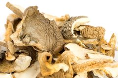 Porcini mushrooms dried Royalty Free Stock Image