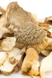 Porcini mushrooms dried Stock Photos