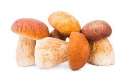 Porcini Mushrooms. Isolated on white Stock Images