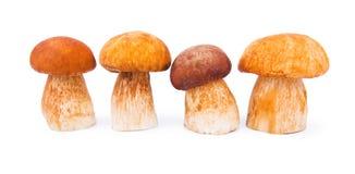 Porcini Mushrooms. Isolated on white Royalty Free Stock Photo