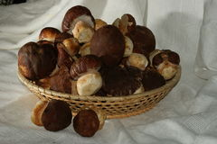Porcini mushrooms in low basket on white tablecloth Royalty Free Stock Images