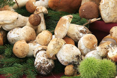 Porcini mushrooms Royalty Free Stock Photos