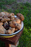 Porcini na bacia do metal no tamborete pequeno de madeira Cogumelos selvagens comestíveis brancos copie o espaço para seu texto Fotos de Stock