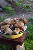 Porcini na bacia do metal no tamborete pequeno de madeira Cogumelos selvagens comestíveis brancos copie o espaço para seu texto Fotografia de Stock