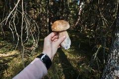 Porcini pieczarka w kobiety ` s ręce trzyma jeden pieczarki w lesie, zamyka w górę widoku Fotografia Royalty Free