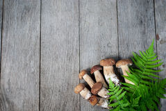 Porcini-Pilz auf hölzernem Hintergrund Lizenzfreie Stockfotografie